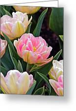 Springtime Sprites -- Parrot Tulips Greeting Card