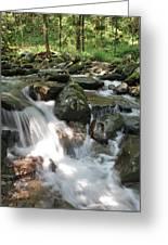 Springtime Stream Greeting Card by Tammy Davis