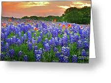 Springtime Sunset In Texas - Texas Bluebonnet Wildflowers Landscape Flowers Paintbrush Greeting Card by Jon Holiday