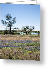 Springtime Texas Bluebonnets Naturalized Greeting Card