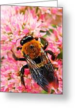 Sprinkled With Pollen Greeting Card