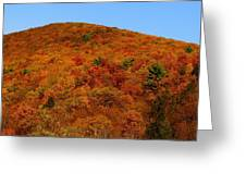 Sproul State Forest Greeting Card