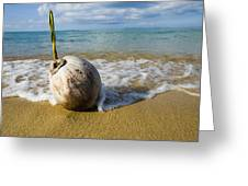 Sprouting Coconut Washed Up On Beach Greeting Card by Naki Kouyioumtzis