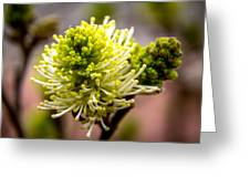 Sprouts On A Bush Greeting Card