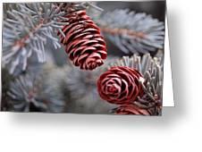 Spruce Cone Closeup II Greeting Card