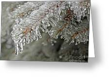 Spruce Under Glass Greeting Card