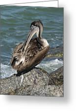 Sprucing Pelican Greeting Card