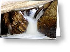 Spun Silk - Sequoia National Park Greeting Card