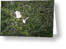 Squabbling Birds Greeting Card