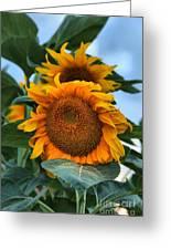 Squamish Sunflower Portrait Greeting Card