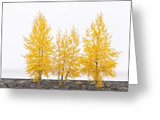 Square Diptych Tree 12-7693 Set 1 Of 2 Greeting Card