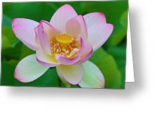 Square Lotus Flower Greeting Card