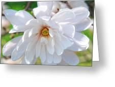 Square Magnolia Greeting Card
