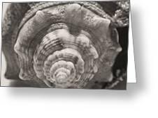 Square Sepia Sea Shell Greeting Card