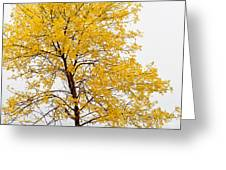 Square Tree Greeting Card