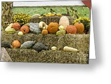 Squash Gourds And Pumpkins Greeting Card