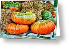 Squatty Orange Pumpkins Greeting Card