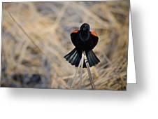 Squawk Greeting Card