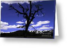 Squigly Tree Greeting Card