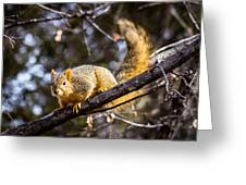 Squirrel 1 Greeting Card