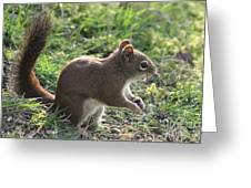 Squirrel And His Sunflower Seed Greeting Card