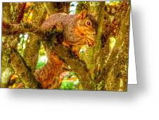 Squirrel Away Acorn Greeting Card