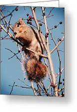 Squirrel Berry Greeting Card