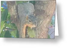 Squirrel Chillin Greeting Card