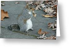 Squirrel Chomping On Bread Greeting Card