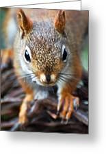 Squirrel Close-up Greeting Card