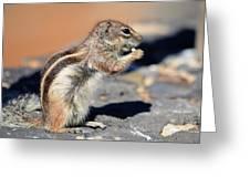 Squirrel Con Queso Greeting Card