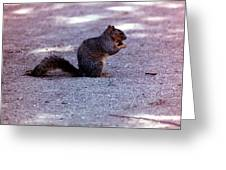Squirrel Eating A Nut Greeting Card