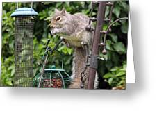 Squirrel Eating Nuts Greeting Card