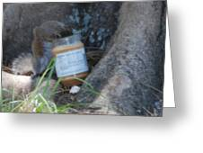 Squirrel Eating Greeting Card