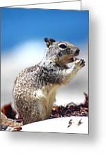 Squirrel Enjoying Lunch On The Beach Greeting Card
