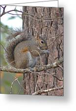 Squirrel Finds A Treat Greeting Card