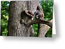 Squirrel Guarding Watering Knot Greeting Card