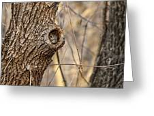 Squirrel Hole Greeting Card