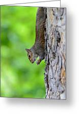 Squirrel In A Tree Greeting Card