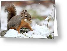 Squirrel In Snow Greeting Card