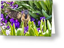 Squirrel In The Botanic Garden Greeting Card