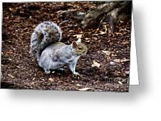Squirrel In The Park-boston  V6 Greeting Card