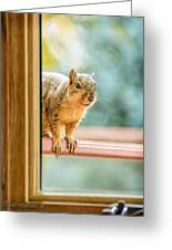 Squirrel In The Window Greeting Card