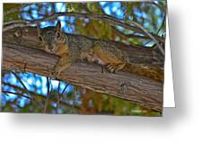 Squirrel Looking Down On Viewer Greeting Card
