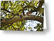 Squirrel On A Branch Greeting Card