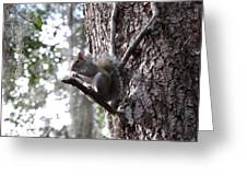 Squirrel On A Stick Greeting Card