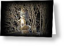 Squirrel On Birch Post Greeting Card