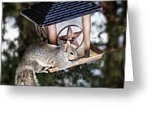 Squirrel On Bird Feeder Greeting Card by Elena Elisseeva