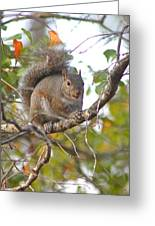 Squirrel On Branch Greeting Card