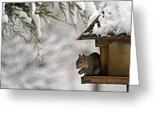 Squirrel On The Bird Feeder Greeting Card